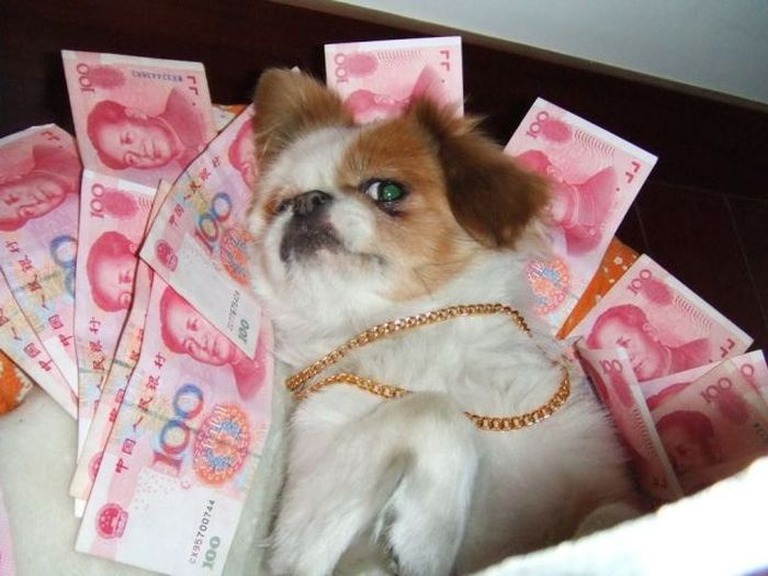 b1d9a  acid picdump 80 THE WEALTHIEST DOG IN CHINA