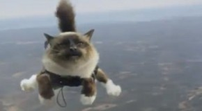 Skydiving Cat Commerical