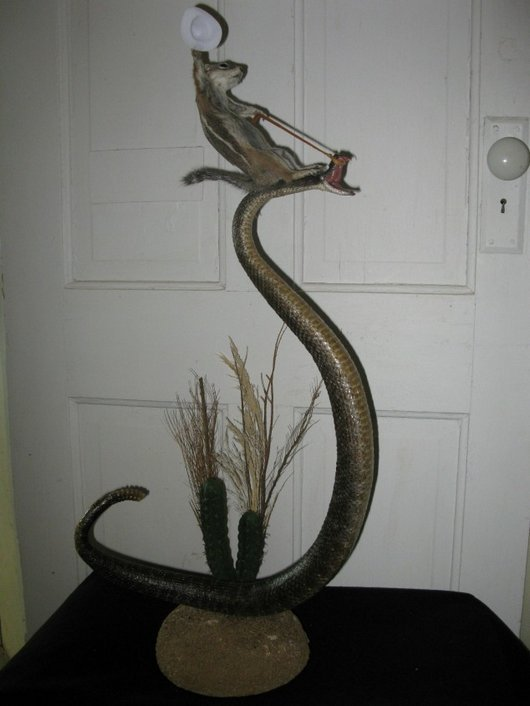 d4089  squirrel riding rattle snake taxidermy funny wtf1 Squirrel Riding a Rattle Snake: Strange Taxidermy