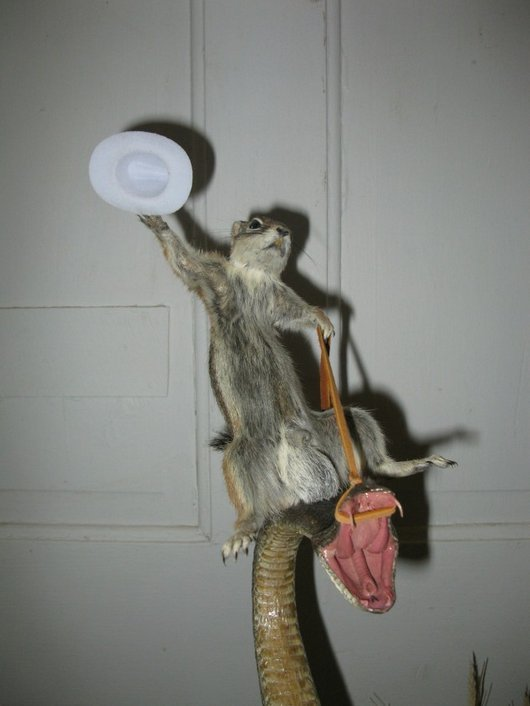 d4089  squirrel riding rattle snake taxidermy funny wtf2 Squirrel Riding a Rattle Snake: Strange Taxidermy